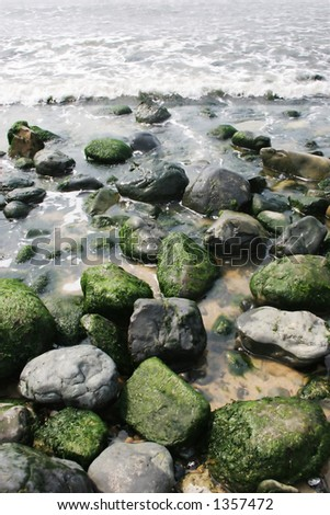 Green moss growing on rocks at the beach