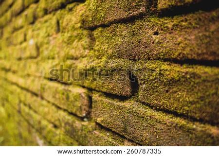 Green moss grows on old brick wall. Brickwork - stock photo