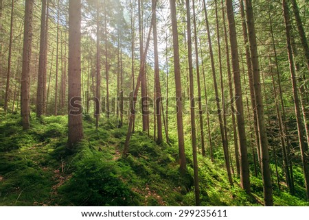 green moss in a beautiful forest wooden