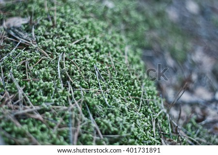 Green Moss in the forest. Shallow depth of field. Bokeh - stock photo