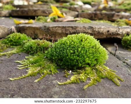 Green moss macro - stock photo