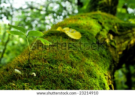 Green moss on a tree - stock photo