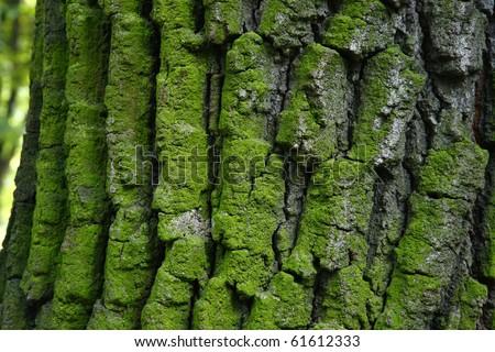 green moss on a tree bark - stock photo