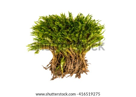Green moss on a white background. Moss with roots isolated. - stock photo