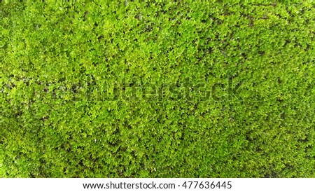 Green moss on old concrete floor