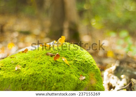 Green moss on old stone wall - stock photo
