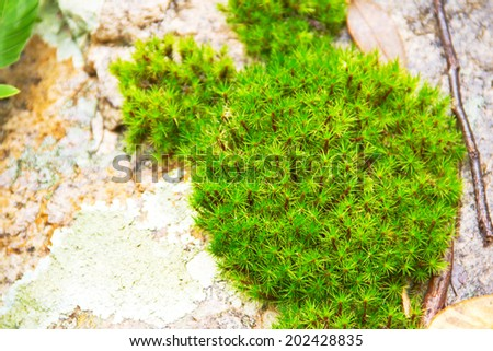 Green Moss on Stone Close-Up - stock photo