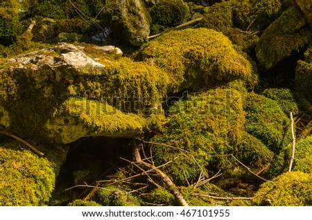 green moss on stony forest floor