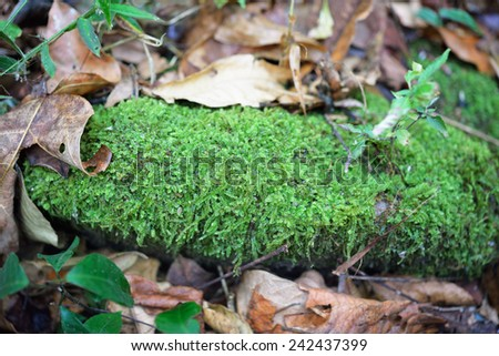 green moss on the rock - stock photo