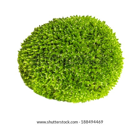 Green moss on white - stock photo