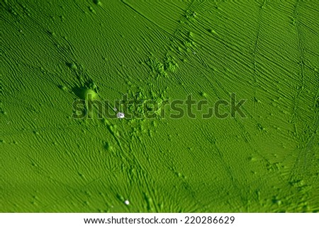 green moss or algae with bubbles and wrinkles that looks like an alien landscape - stock photo