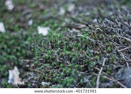 Green moss. Shallow depth of field. Bokeh - stock photo
