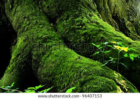 Green Mossy Stump - stock photo