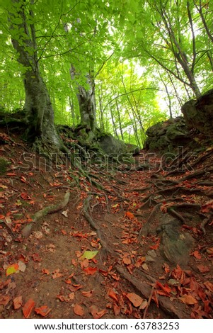 green mountain forest - stock photo