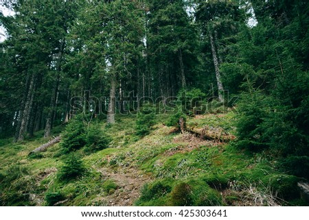 Green Mountain Forest background. Misty pine forest landscape. Travel