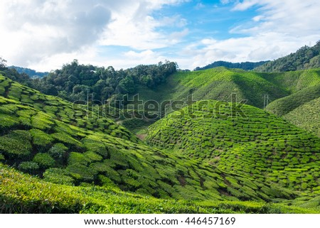 Green mountain of tea plantations with blue sky near Cameron Valley in Cameron Highlands, Malaysia. - stock photo