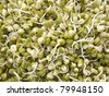 Green mung beans sprouts - stock photo