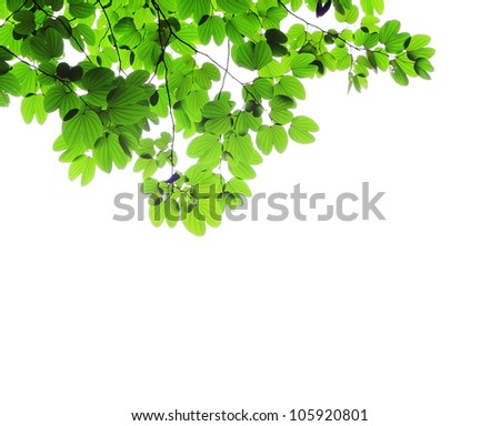 Green natural leaves on white background - stock photo