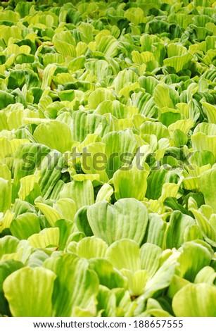 green natural plant texture - endless  - stock photo