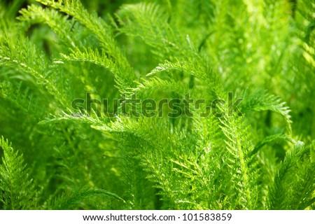 Green Nature Background-Delicate foliage in soft sunlight - stock photo