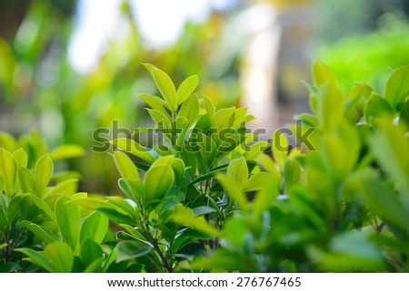 Green Nature Background .Very Shallow DOF - stock photo