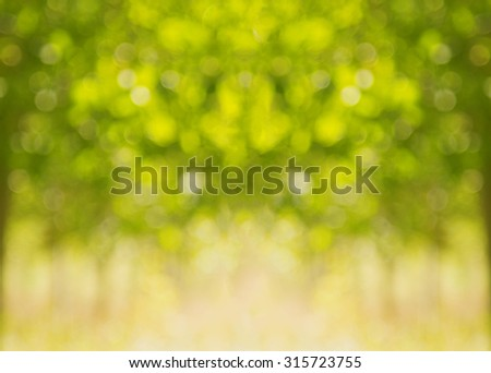 Green nature bokeh from tree. Natural  blurred background bokeh.  - stock photo