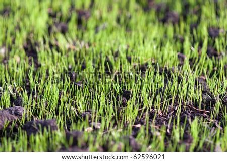 Green nature grass plant outdoor growth background - stock photo