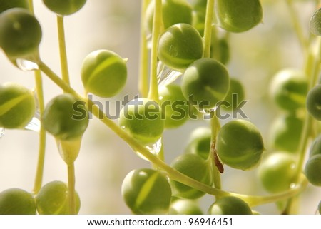 Green necklace - stock photo