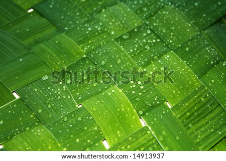 Green network leaf with rain droplets - stock photo