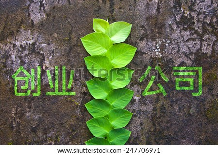 Green nice plant on an old grungy wall with a title Startup on chinese - stock photo