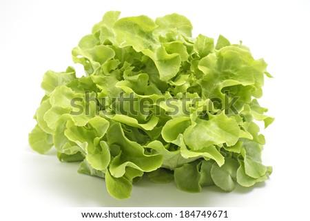 Green oak leaf lettuce isolated on white - stock photo