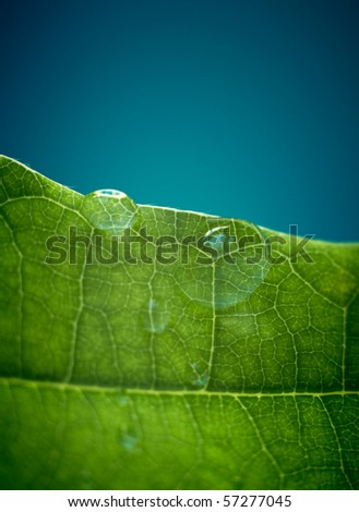 Green oak leaf with water drops. Shallow DOF. With space for text. - stock photo