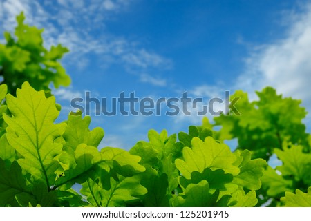 Green oak leaves against the blue sky with clouds - stock photo