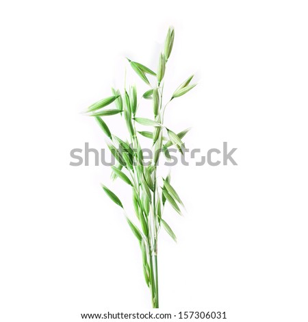 Green oat ears isolated on white background - stock photo