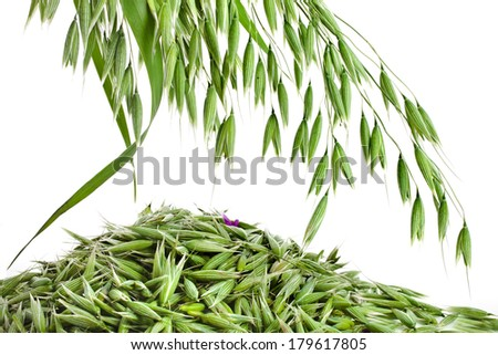 green oat seeds heap close up isolated on white background  - stock photo