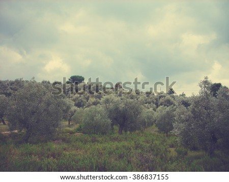 Green olive groves in Greece on a cloudy stormy day in early autumn. Image filtered in faded, retro, Instagram style with extremely soft focus; nostalgic landscape with dramatic sky.