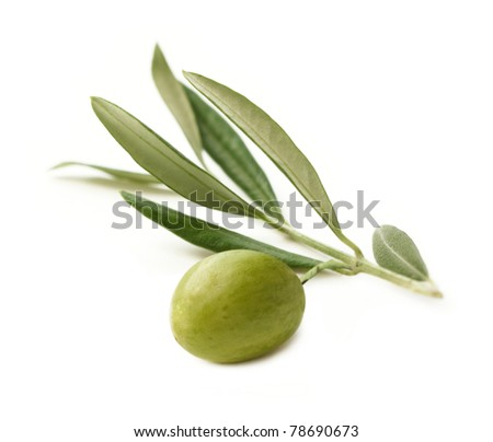 Green Olive on branch isolated on white Background - stock photo