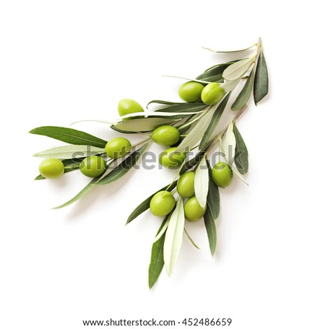 green olives branch isolated on white background. copy space - stock photo