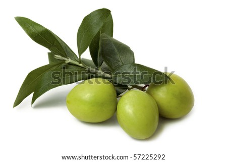 Green Olives on Branch isolated on white Background - stock photo