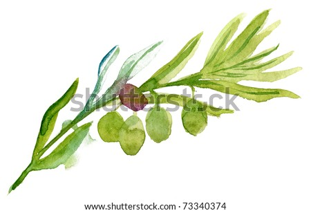 Green olives Watercolor - stock photo