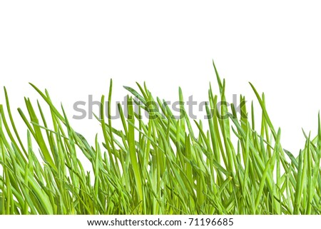green onion isolated on a white background - stock photo