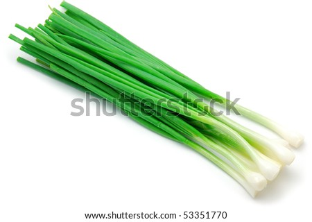 Green Onion Sketch Green onions - stock photoGreen Onion Sketch