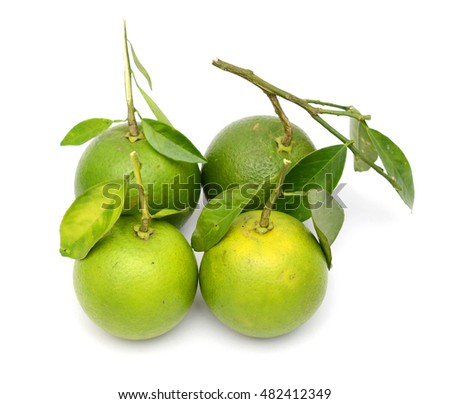 green oranges isolated on white