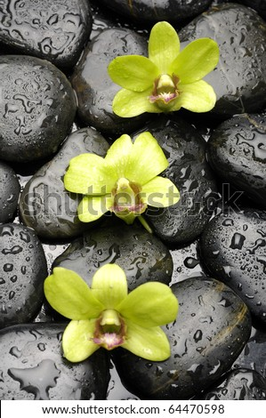 Green orchid with green plant on wet pebble in water drops - stock photo