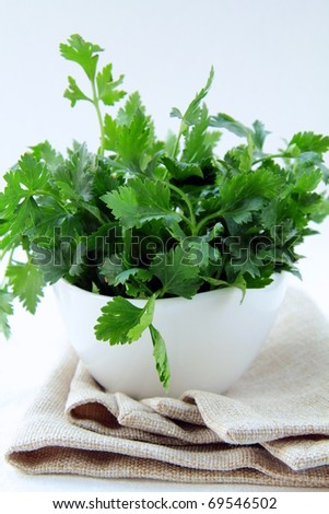 green, organic parsley in a white cup - stock photo