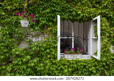 green overgrown house with the window open