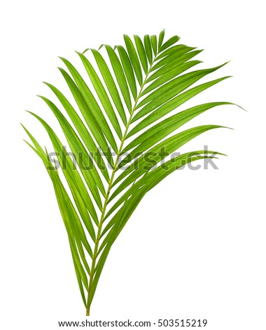Green palm branch on light background