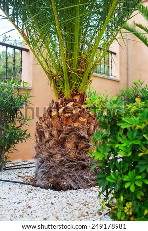 Green palm in the backyard and bush on the foreground. - stock photo