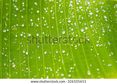 green palm leaf background with dew drops