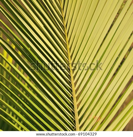 Green palm leaf close up background
